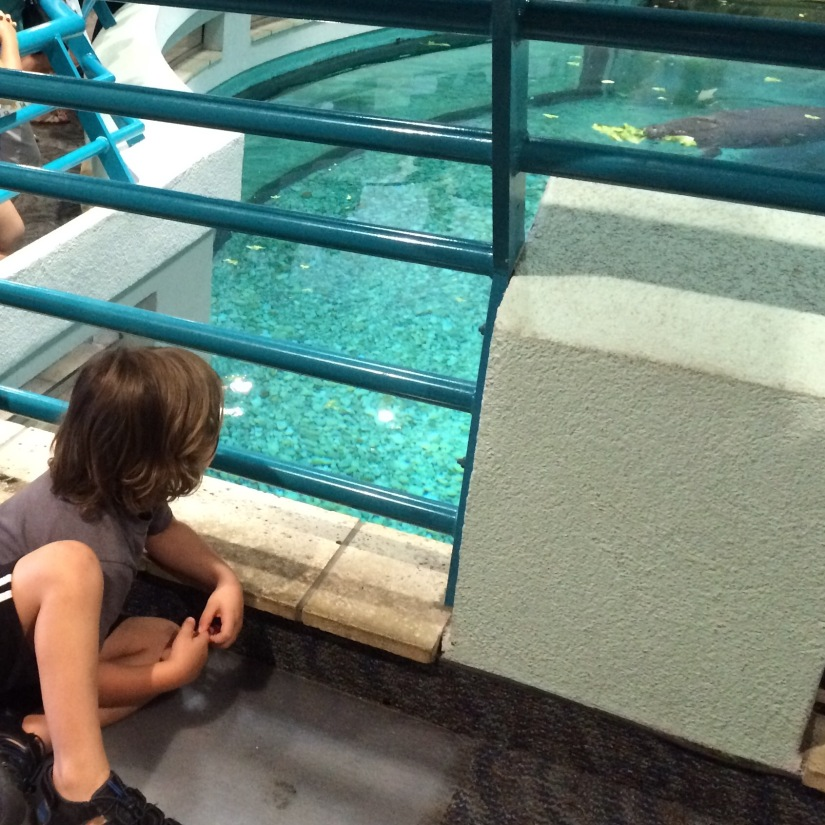 South-Florida-museum-manatees.jpg